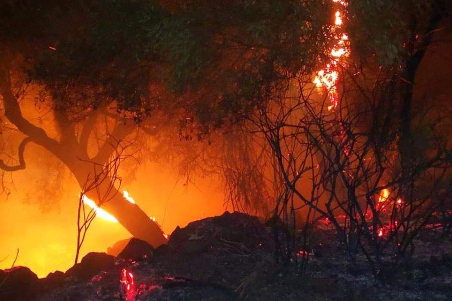 Φωτιά σε δάσος στην Λέσβο