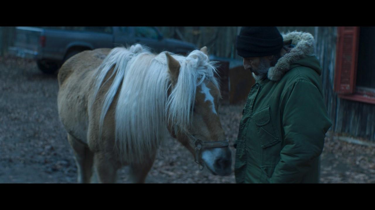 αλογο