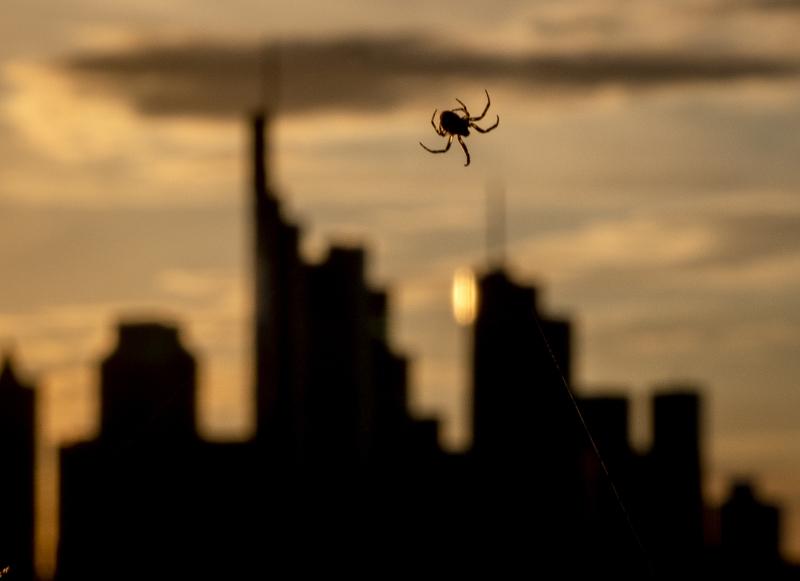 Αράχνη και φόντο ουρανοξύστες
