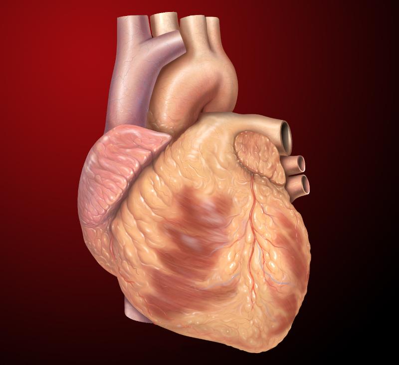 Ανθρώπινη καρδιά
