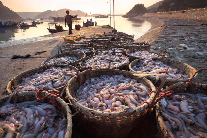 καλάθια με ψάρια
