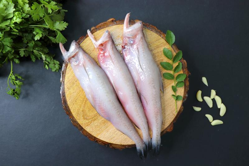 τα ψάρια Mombay duck