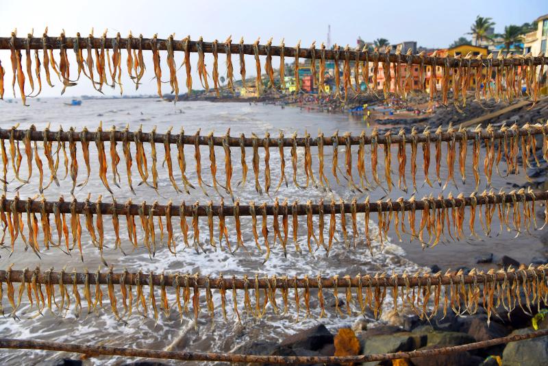 Τα ψάρια αφήνονται να στεγνώσουν στον ήλιο